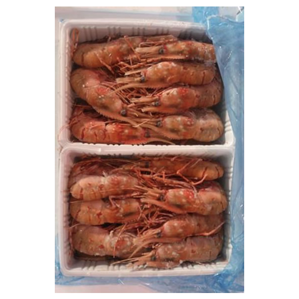 Frozen Shrimp Botan Ebi · Japanese Food Product Supplier- Kami